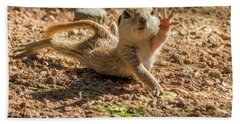 Round-tailed Ground Squirrel Stretch Beach Towel by Tam Ryan