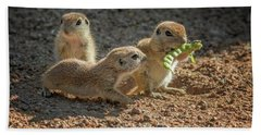 Round-tailed Ground Squirrels 1198 Beach Towel by Tam Ryan