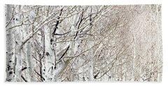 Row Of White Birch Trees Beach Towel