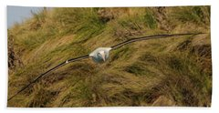 Royal Albatross 2 Beach Towel by Werner Padarin