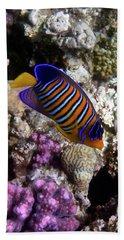 Royal Angelfish Macro 3 Beach Towel