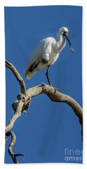 Royal Spoonbill 01 Beach Sheet