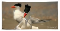 Royal Tern Catch Beach Towel
