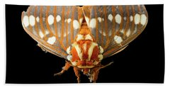 Royal Walnut Moth On Black Beach Towel