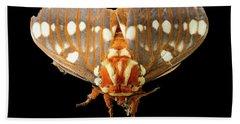 Royal Walnut Moth On Black Beach Towel