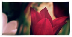Beach Towel featuring the photograph Ruby Red Tulip by Donna Lee