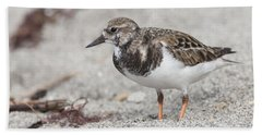 Ruddy Turnstone On The Beach Beach Sheet