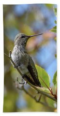 Rufous Hummingbird Beach Towel