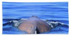 Rusty Humpback Beach Sheet by Shoal Hollingsworth