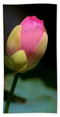 Sacred Lotus Bud 3 Beach Towel