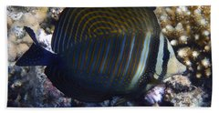 Sailfin Tang  Beach Towel