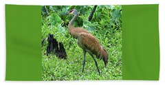 Sandhill Crane At Sandy Ridge Reservation Beach Towel