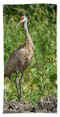 Sandhill Crane Beach Sheet