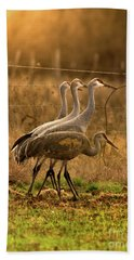 Beach Towel featuring the photograph Sandhill Cranes Texas Fence-line by Robert Frederick