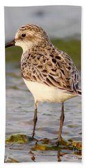 Sandpiper Portrait Beach Sheet