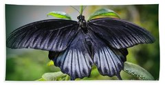 Sapphire Blue Swallowtail Butterfly Beach Sheet
