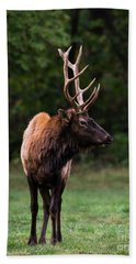 Beach Towel featuring the photograph Satellite Bull Elk Left by Andrea Silies