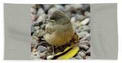 Say's Phoebe Fledgling Beach Towel