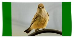 Say's Phoebe Ranch Bird Beach Towel