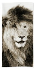 Scar Lion Closeup Square Sepia Beach Sheet