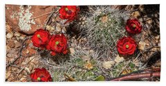 Scarlet Cactus Blooms Beach Towel