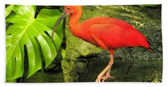 Scarlet Ibis Beach Towel