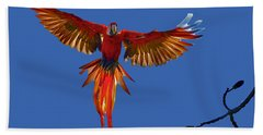 Scarlet Macaw On The Osa Peninsula Beach Towel