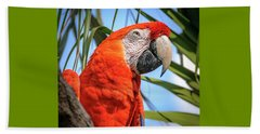 Beach Towel featuring the photograph Scarlet Macaw by Steven Sparks