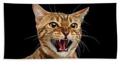 Scary Hissing Bengal Cat On Black Background Beach Towel