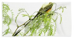 Beach Towel featuring the photograph Scissortail On Mesquite by Robert Frederick
