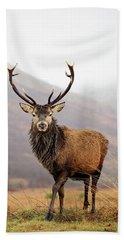 Scottish Red Deer Stag - Glencoe Beach Towel