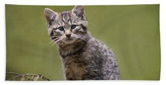 Scottish Wildcat Kitten Beach Sheet
