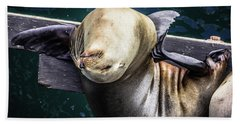 California Sea Lion - Scratch The Itch Beach Sheet