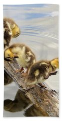 Preening Frenzy Beach Towel