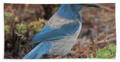 Scrub Jay Framed In Green Beach Sheet