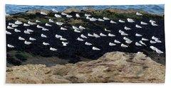 Sea Birds At Rest Beach Towel