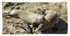Sea Lion Family Beach Towel
