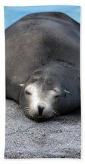 Sea Lion Snooze Beach Towel