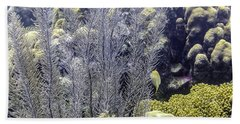 Beach Towel featuring the photograph Sea Plumes Coral 2 by Perla Copernik