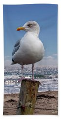 Seagull On The Shoreline Beach Towel by Phil Perkins