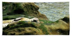 Beach Towel featuring the photograph Seal On The Rocks by Anthony Jones