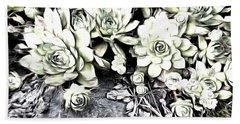 Sempervivum - Ebony And Ivory  Beach Sheet