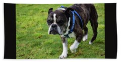 Leroy The Senior Bulldog Beach Towel