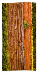 Beach Towel featuring the photograph Sequoia Abstract by Rikk Flohr