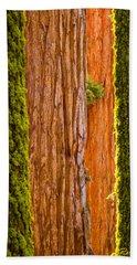 Sequoia Abstract Beach Sheet