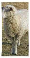 Sheep Beach Sheet