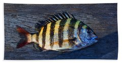 Beach Towel featuring the photograph Sheepshead Fish by Laura Fasulo