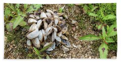 Beach Sheet featuring the photograph Shells Of Freshwater Mussels by Michal Boubin
