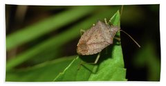 Shield Bug Beach Sheet