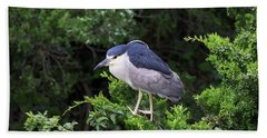 Shore Bird Roosting In A Tree Beach Towel